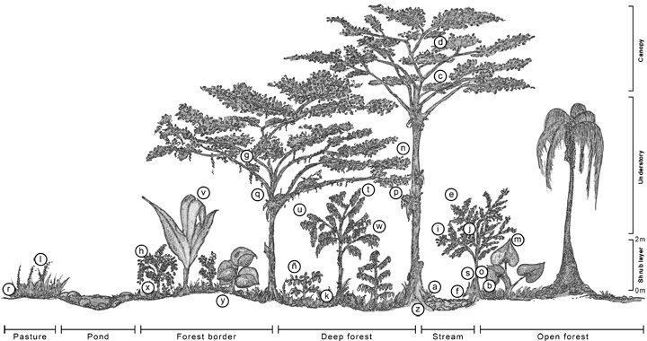 cloudforest-profile.jpg